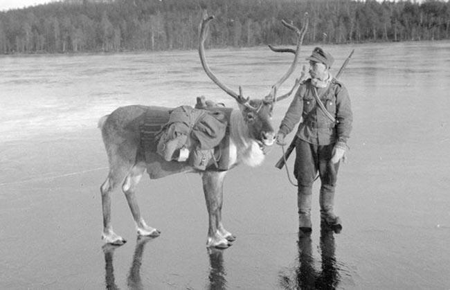 Финляндия, фашист и олень