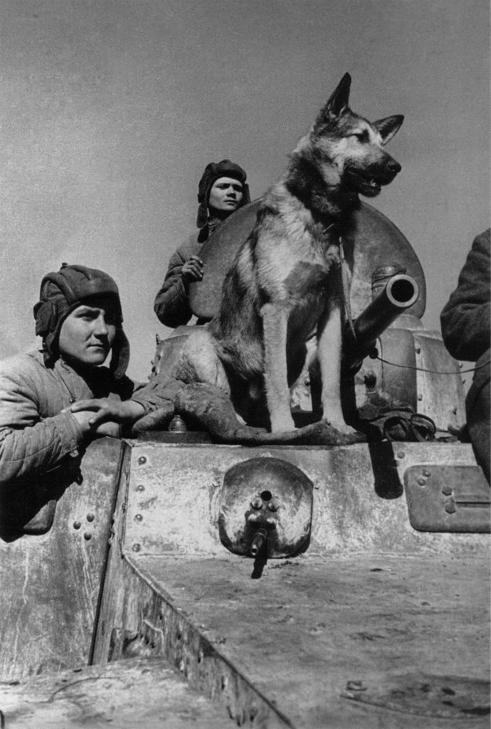 Экипаж бронемашины БА-10 старший сержант Е.Эндрексон и сержант В.Першаков со своим боевым другом - овчаркой Джульбарс.