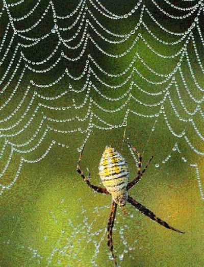 Яблоки дьявола: Мины-пауки