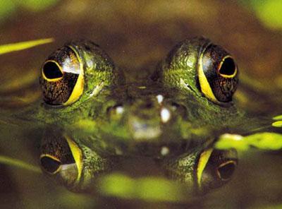 Мины-лягушки: Как из-под земли