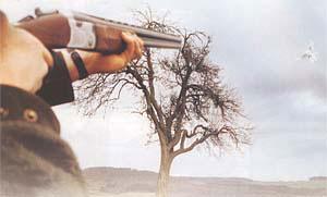 Pigeon guns