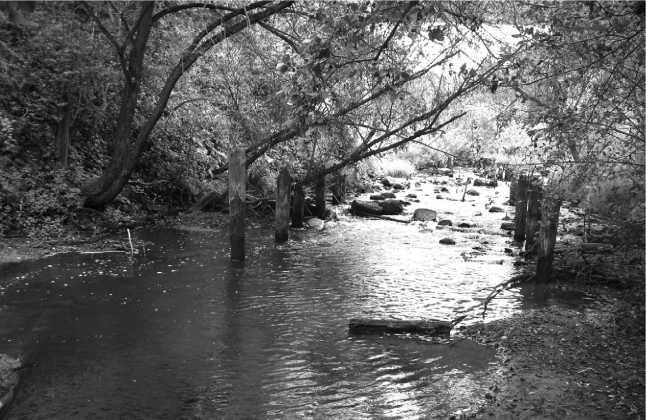 Это место в наши дни — оно сильно заросло кустами.Сохранились опоры деревянного моста.Август 2010 года(фото автора).