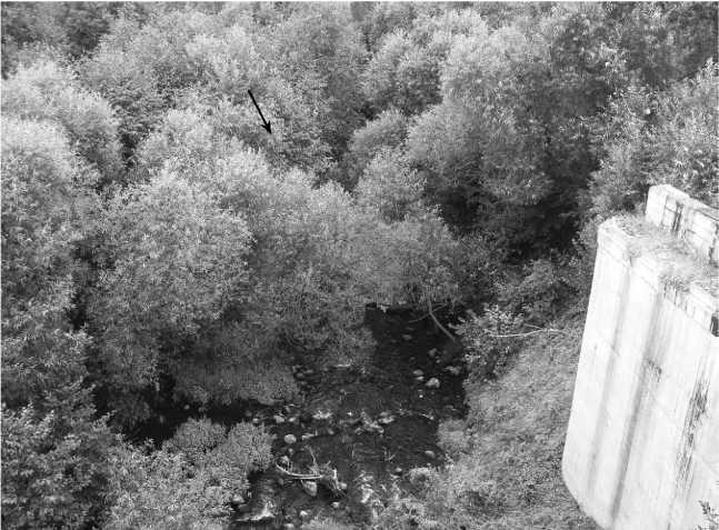 Тот же ракурс, повторенный в наши дни. Берега реки сильно заросли кустарником, место, где стояли танки, показано стрелкой(фото автора).