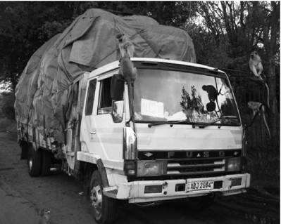 Грузовик Фьюзо (Мицубиси). Зимбабве. Фото Елена Харитонова