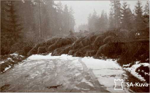 Засека из деревьев на дороге.