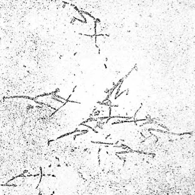 Боевая стычка первобытных охотников. Рисунок на стене пещеры Морелла-ла-Велла в Испании.