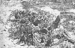 РАЗДЕЛ 6. МАСКИРОВКА СНАЙПЕРСКОЙ ПОЗИЦИИ НА МЕСТНОСТИ