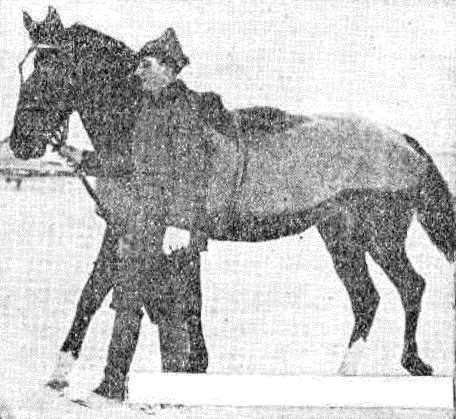 Когда лошадь обсохнет, нужно ее покрыть попоной.