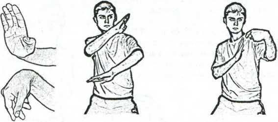 Рис. 4.4. Ладонь, предплечье, лучезапястный сустав - форма журавля