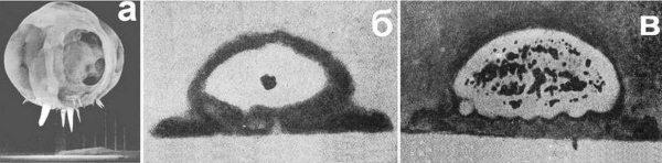 2.2 Уран, нейтроны мгновенные и запаздывающие, быстрые и тепловые