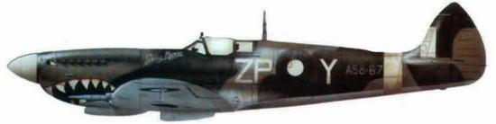 """«Спитфайр VIII» (А58-672. бывший MV156/ZP@Y), 457-я австралийская эскадрилья, Моротай. Новая Гвинея, май 1945 года. Самолет выкрашен в серо-зеленый цвет, но оттенок австралийских красок отличается от английского образца. Под капотом изображена акулья пасть, у фонаря надпись """"Grey Nurse""""."""