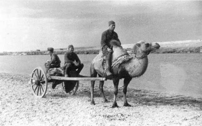 Бойцы Красной Армии осваивают новое «транспортное средство» — телегу с запряженным в нее верблюдом, август 1939 года. Такие упряжки использовались в составе кавалерийских дивизий Монгольской Народно-Революционной Армии (АСКМ)