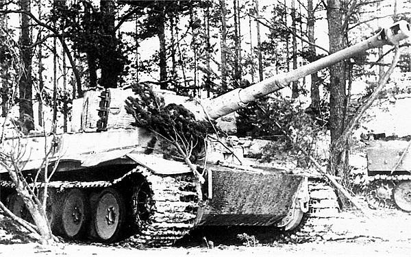 «Тигры» 502-го тяжёлого танкового батальона в засаде. Восточный фронт, район Нарвы, февраль 1944 года.